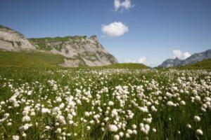 Best soft cotton baby clothes-Cotton fieldclothes-Cotton field