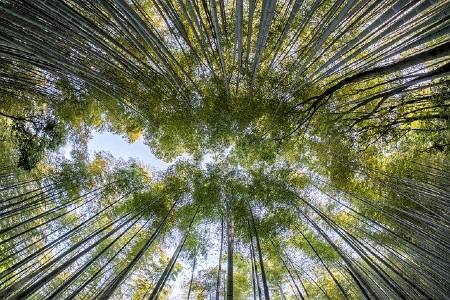 What is Oeko-Tex 100 certified mean?-Bamboo forest.