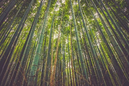 Best baby clothes Online-Bamboo forest.